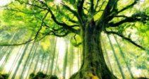 Гайд — «Волшебное дерево»