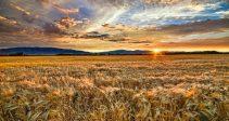 Гайд — «Последний урожай»
