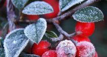 Гайд — «Дары зимы»