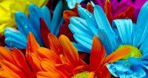 Гайд — «Межсерверный рейтинг дарения цветов»